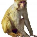 Year of the Monkey Stock Market Forecast
